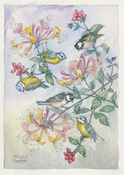 Postcard Molly Brett | Blue tits and coal tits on a honeysuckle