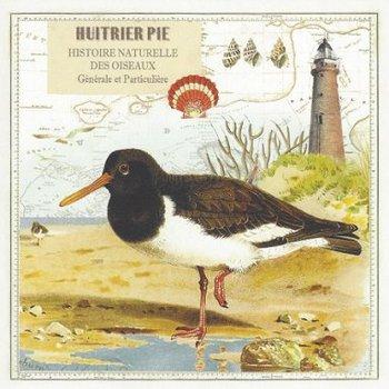 Gwenaëlle Trolez Créations Square Postcard   Huitrier Pie