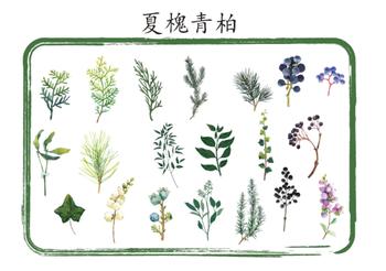 Sticker Flakes Tin | Plants