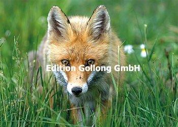 Shutterstock.com - Czesnak Zsolt Postcard | Fox