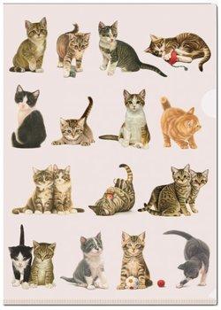 A4 Plastic File Folder: Franciens Katten, Francien van Westering