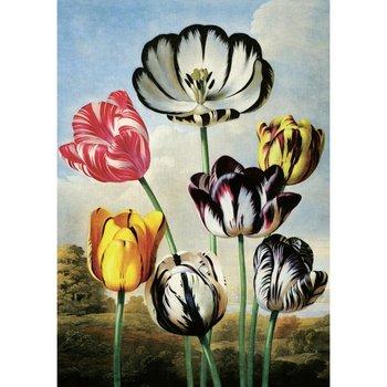 Postcard | Tulips