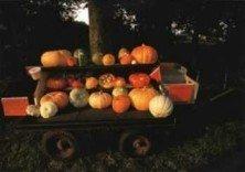 Postcard | Pumpkins for sail