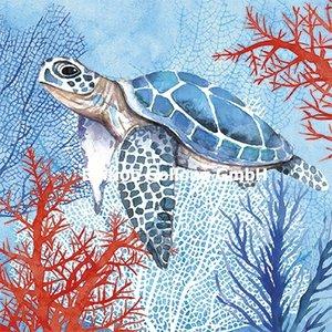 Carola Pabst Postcard   Turtle