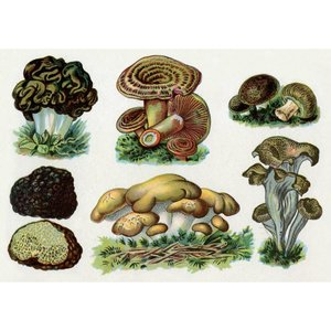 Postcard | Vintage Mushroom Illustration