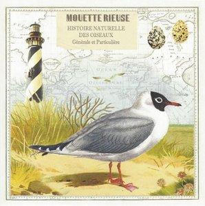 Gwenaëlle Trolez Créations Square Postcard | Mouette rieuse