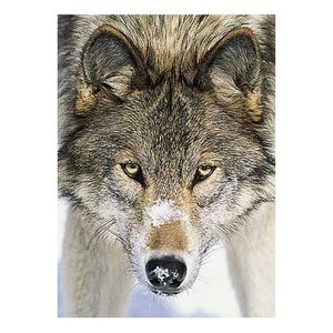 Postcard Tushita | Wolf