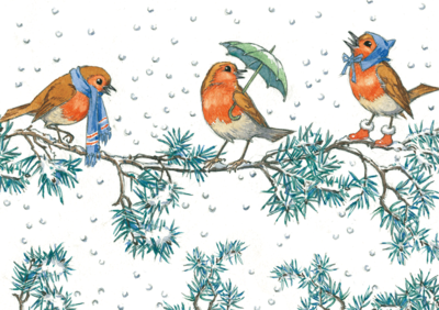 Postcard Molly Brett | Three Robins On A Branch At Christmas