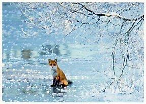 Postcard | Ice Fox (Fuchs)