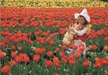 Postcard | Liefde tussen de tulpen