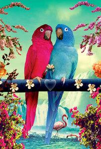 Parrots Individual Postcard by Max Hernn