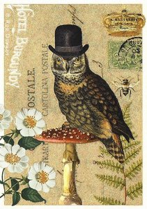 Postcard Edition Tausendschoen   Owl Hat