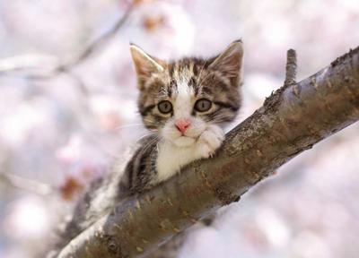 Postcard Tushita | Kitten