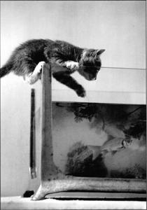 Postcard Gutrath Verlag   Cat kitten and the fish