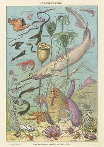 Postcard | Oceanographie