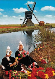 Postcard   Dutch Life