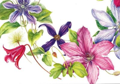 Museum Cards Postcard | Clematis Wreath