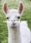 Shutterstock - Burry van den Brink Postcard | Lama