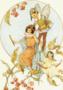 Postcard Margareth W. Tarrant | Spindle Berries
