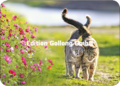Postcard - Two Cats