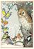 Postcard Molly Brett | An owl and other birds_
