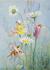 Postcard Margaret Tarrant   Joan in Flowerland_