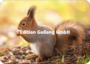 Adobe Stock - Youlaangel Postcard | Squirrel_