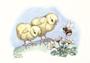 Postcard Molly Brett | Two Chicks Meet A Bee_