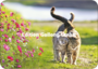 Postcard - Two Cats_