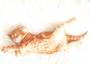 Cartweb Retro Postcard | Sleeping Cat_