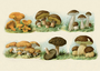 Postcard | Vintage Mushroom Illustration_