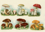 Postcard | Vintage Mushroom Illustration_